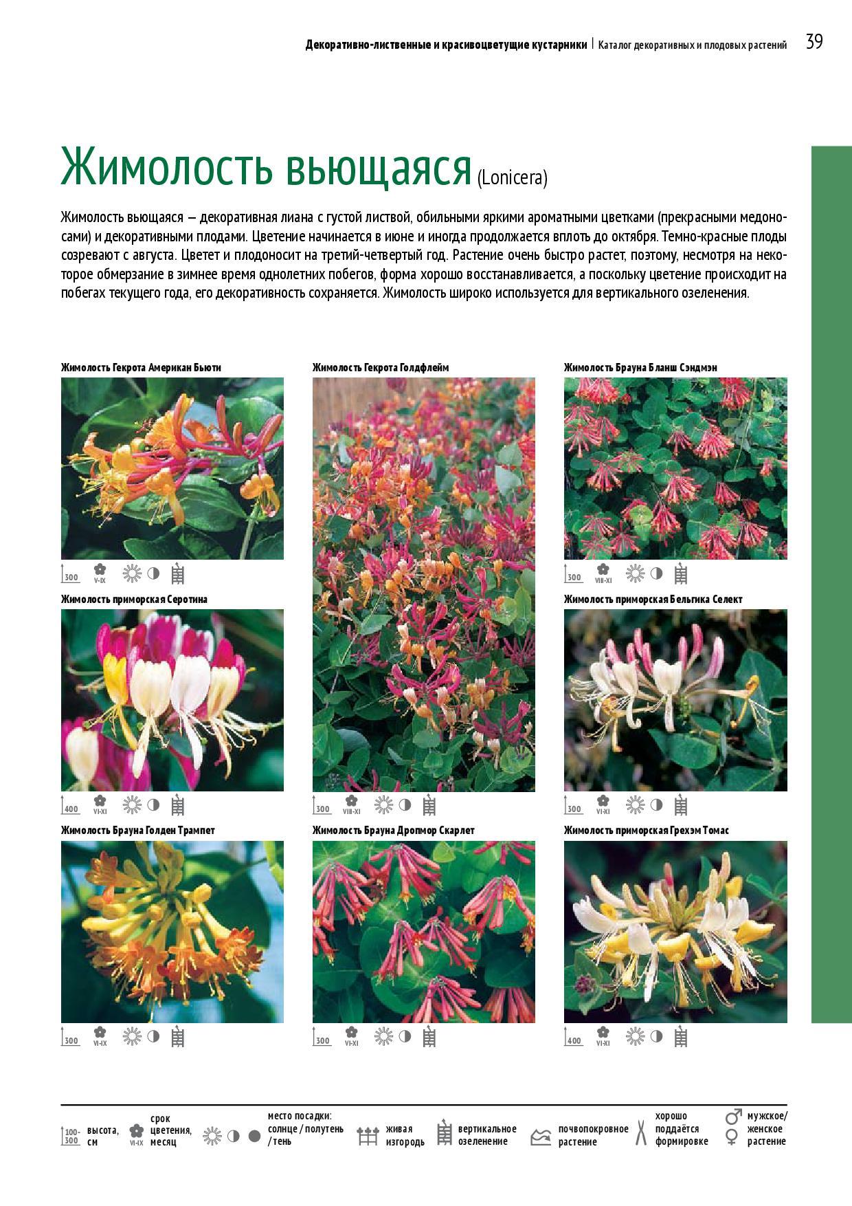 Декоративные растения цветы фото и описание